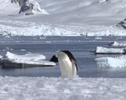 Kate Upton's Antarctica Adventure, SI Swimsuit 2013