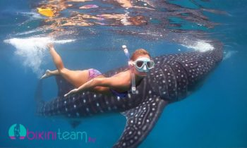 Models Swimming with Whale Sharks in Oslob Cebu Philippines [HD]